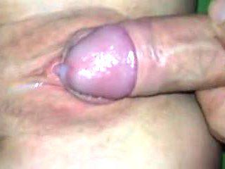 Hindu Stud Breeding Austrailian Tight Young Slut In Sydney.m